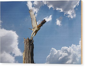 Red-tailed Hawk Perch Series 5 Wood Print by Roy Williams