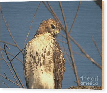 Wood Print featuring the photograph Red Tailed Hawk  by Susan  Dimitrakopoulos