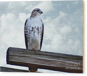 Red Tailed Hawk Waiting Wood Print by Gena Weiser