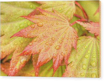 Red Tip Leaf Wood Print