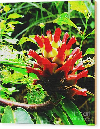 Red Torch Ginger Flower One Wood Print by Tina M Wenger