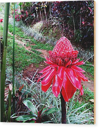 Red Torch Ginger Flower Two Wood Print by Tina M Wenger