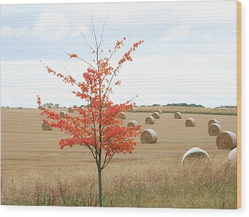Wood Print featuring the photograph Red Tree by Elizabeth Lock