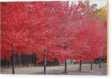 Red Tree Line Wood Print
