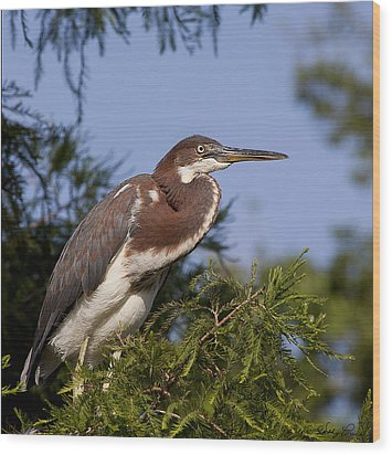 Wood Print featuring the photograph Red Tricolor Heron I by Kathy Ponce