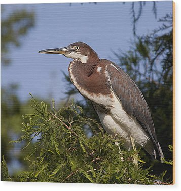 Wood Print featuring the photograph Red Tricolor Heron II by Kathy Ponce