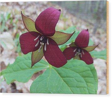 Red Trilliums Wood Print