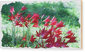 Red Trumpets Wood Print by Ellen O'Reilly
