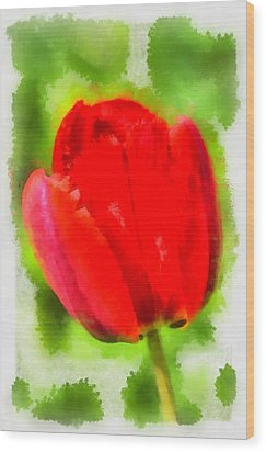 Red Tulip Aquarell Wood Print by Matthias Hauser