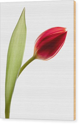 Red Tulip Wood Print by Dave Bowman