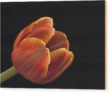 Wood Print featuring the photograph Red Tulip by Kim Andelkovic