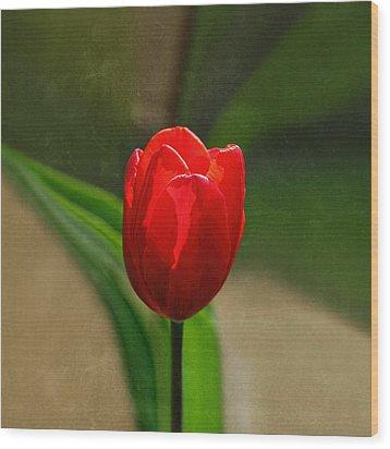 Red Tulip Spring Flower Wood Print