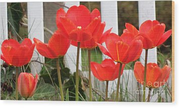 Red Tulips At Fence Wood Print by Christina Verdgeline
