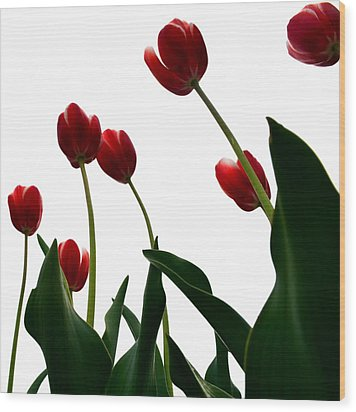 Red Tulips From The Bottom Up Vl Wood Print by Michelle Calkins