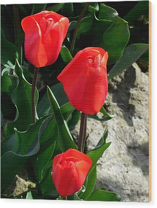 Red Tulips Wood Print by Karen Molenaar Terrell