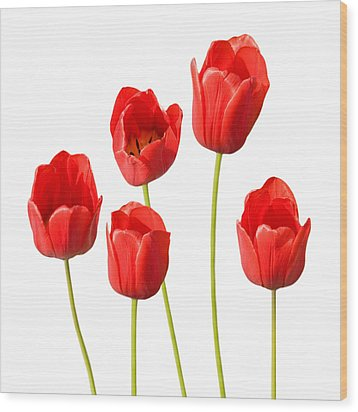 Red Tulips White Background Wood Print by Natalie Kinnear
