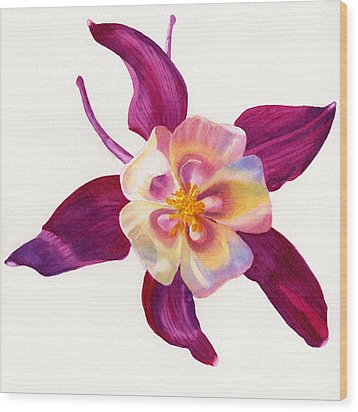 Red Violet Columbine Square Design Wood Print by Sharon Freeman