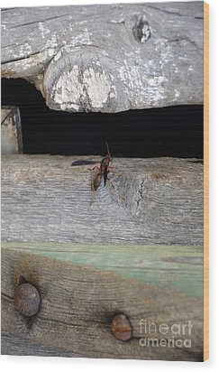 Red Wasp Wood Print by Brenda Dorman