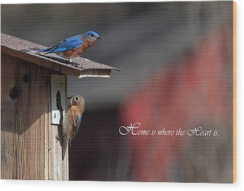 Red White And Blue Birds Wood Print by Michael Rucci