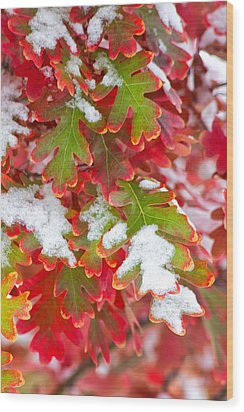 Wood Print featuring the photograph Red White And Green by Ronda Kimbrow