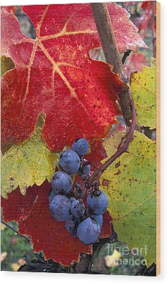 Red Wine Grapes And Leaves In Fall  Wood Print by Gary Crabbe
