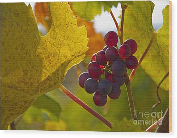 Red Wine Grapes Wood Print