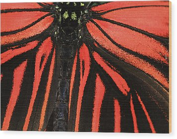 Wood Print featuring the photograph Red Wings by Sonya Lang