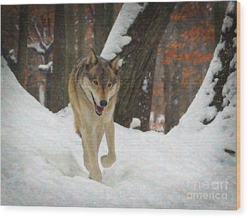 Wood Print featuring the digital art Red Wolf On A Winter Hunt by Lianne Schneider