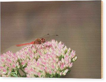 Red Wonder Wood Print by Sue Chisholm