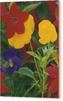 Red Yellow Purple Flowers Wood Print
