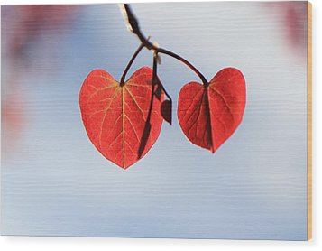 Redbud Illumined Wood Print by Scott Rackers