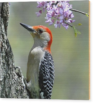 Redbud With Woodpecker Wood Print