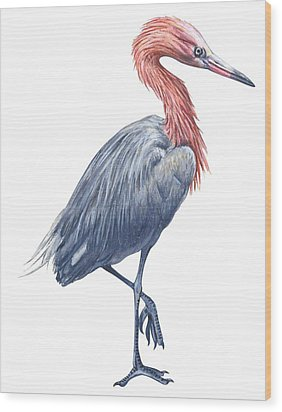 Reddish Egret Wood Print by Anonymous