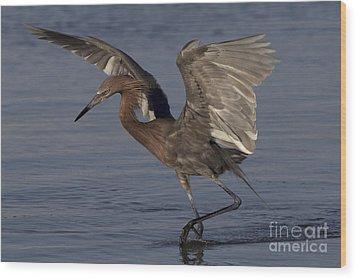 Reddish Egret Fishing Wood Print by Meg Rousher