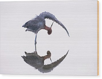 Reddish Egret Wood Print by Marie Read