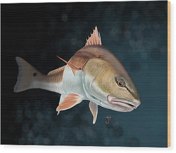 Redfish Inspection Wood Print