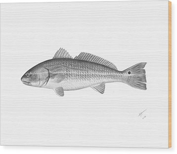 Redfish - Scientific Wood Print