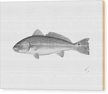 Redfish - Scientific Wood Print