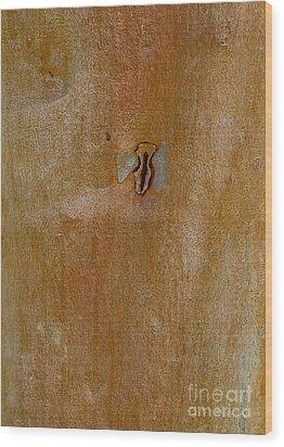 Redgum Tree Wood Print by Steven Ralser