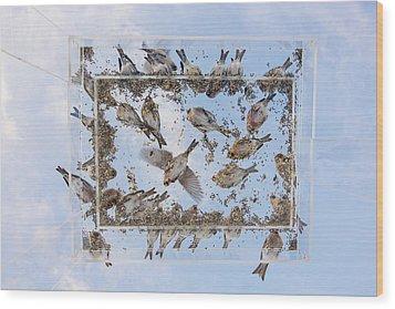 Redpols And Blue Skies Wood Print by Tim Grams