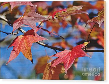 Reds Of Autumn Wood Print by Kaye Menner