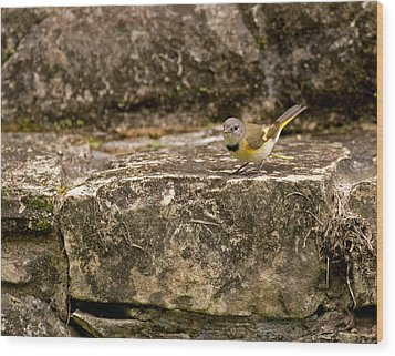 Redstart In Ruins Wood Print by Brian Magnier