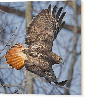 Redtail Hawk Square Wood Print