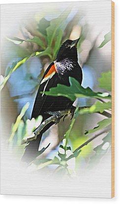 Redwing Strikes A Pose Wood Print by Jp Grace