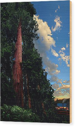 Redwood Cabin Wood Print by Ric Soulen