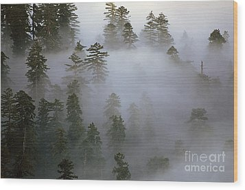 Redwood Creek Overlook With Giant Redwoods  Wood Print