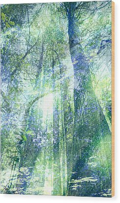 Redwood Dreams Wood Print by Nicole Swanger