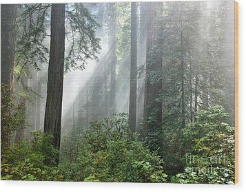 Redwood Forest With Sunbeams Wood Print by Inga Spence