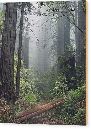 Redwood Mist Wood Print