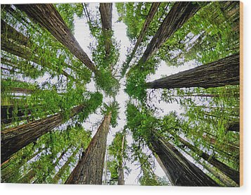 Redwood Skies Wood Print